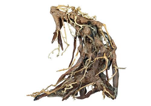 Bonsai Root