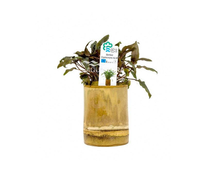 Bamboe Pot - Cryptocoryne Mix