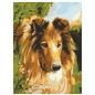 Collection d'art Bedrukt stramien 40x50cm Lassie