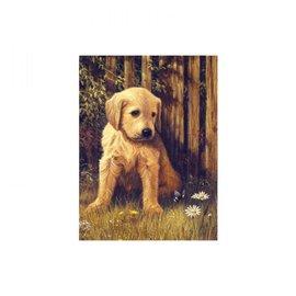 Schilderen op nummers 22,5x30cm Baby labrador