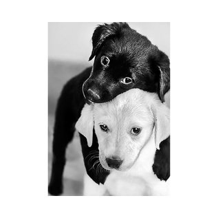 black and white puppies 19x27cm