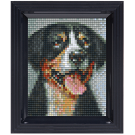 Pixelpakket Swiss Mountain Dog