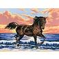 """Collection d'art Bedrukt stramien """"Paard aan zee"""" 40x30cm"""