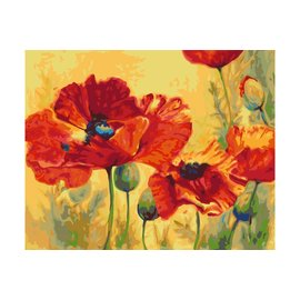 painting by number - Field Poppies 40x50cm