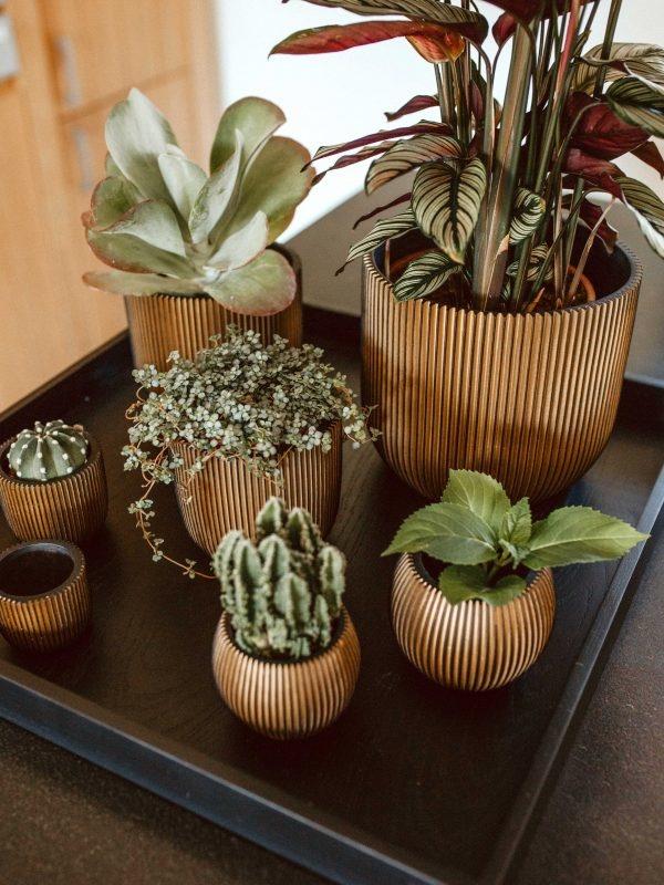 Zo stijl je bloempotten en plantenbakken!