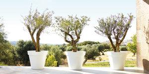 Bloempotten en plantenbakken