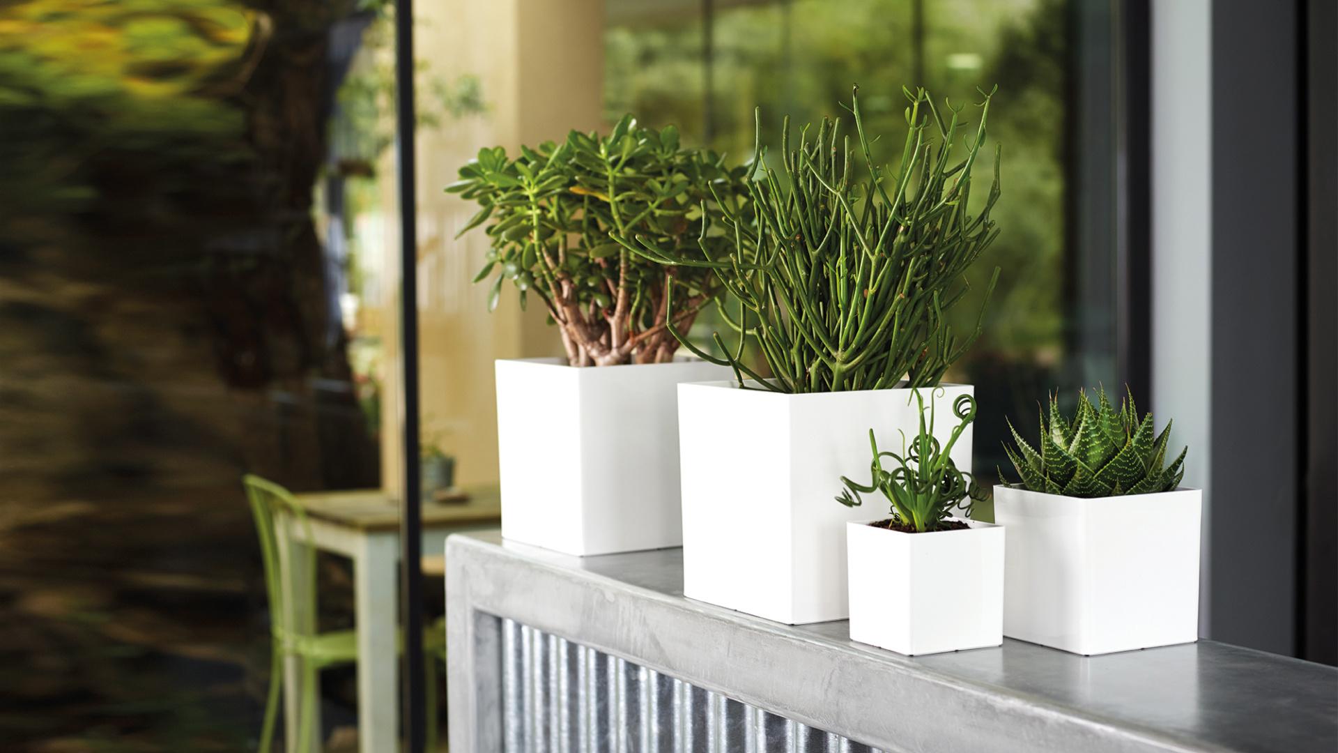 De complete gids voor het planten in potten en plantenbakken