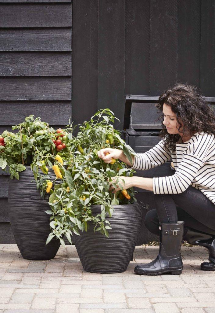 Hoe onderhoud je een plant?