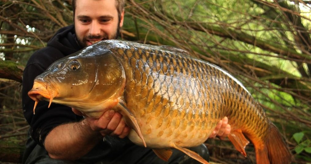 Karpervissen op een Nederlandse rivier - Jeroen van Luik