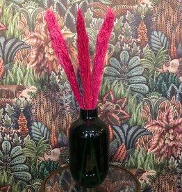 Droogbloem Pampas Pluim - roze