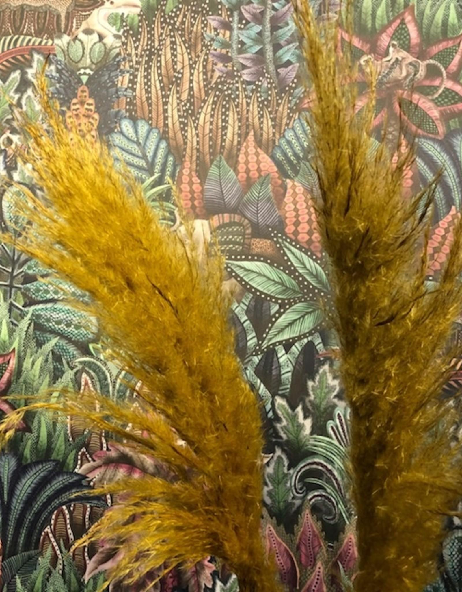 Blooming Droogbloem Pampas Pluim - geel