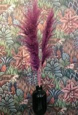Droogbloemen Pampas Pluim - paars