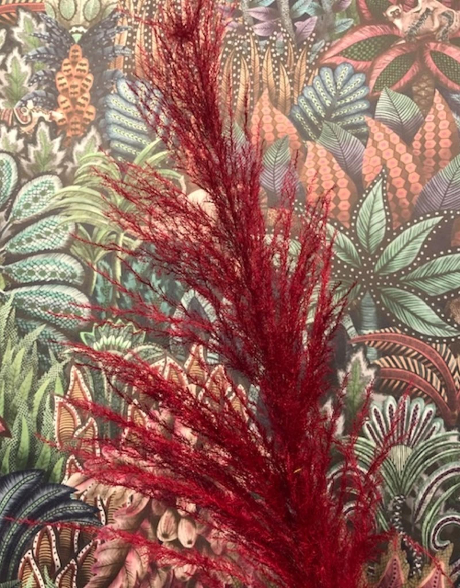 Droogbloemen Pampas Pluim - roze/rood