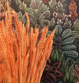 Blooming Droogbloemen Triticum - zalm