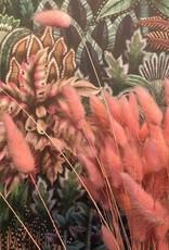 Droogbloemen Hazenstaart - roze