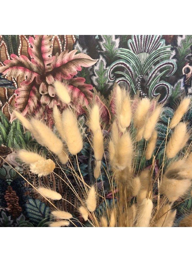 Droogbloemen Hazenstaart - naturel