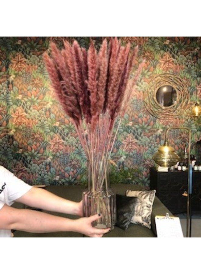 Droogbloemen Pampas Pluim  - klein - Roze