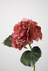 Hortensia Roze