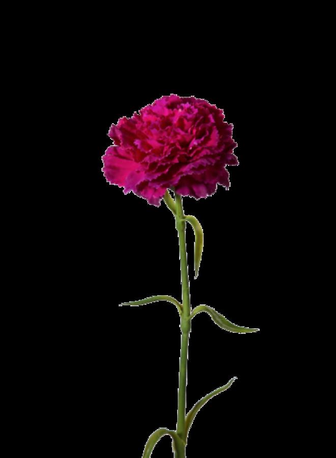 Kunstbloem Anjer paars