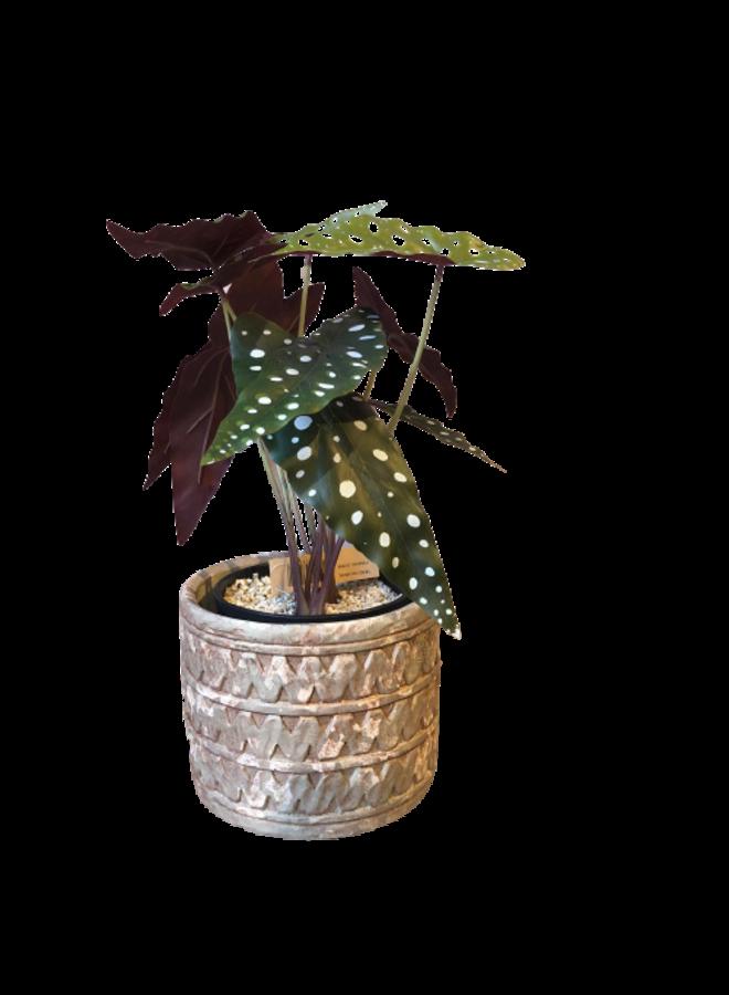 Kunstplantje stippen + potje
