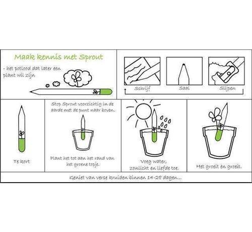 Potloden die uitgroeien tot kruiden