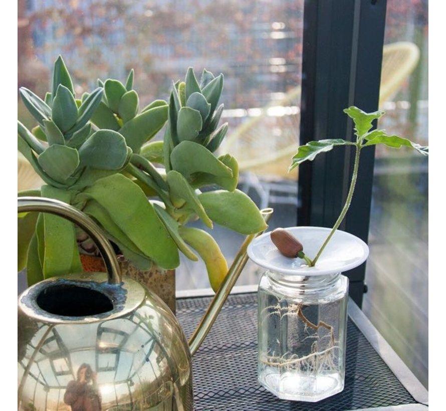 Kiemschaaltje Sprout