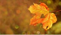 Uw huid voorbereiden op de herfst