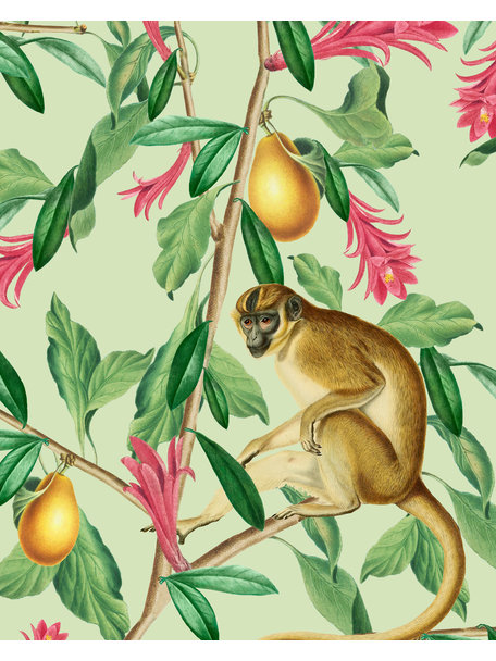 Creative Lab Amsterdam Tropical Monkey Behang Mural