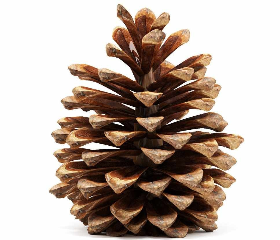 Skin Wash Pine Shower Gel-2