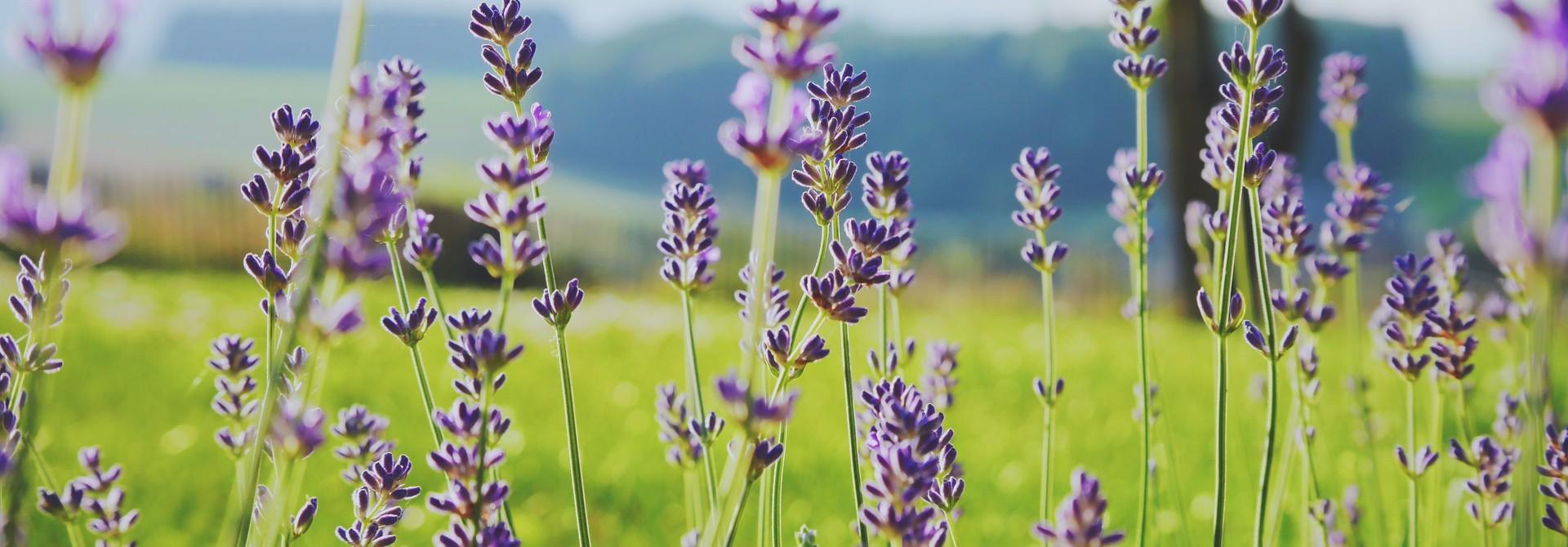 Aromatherapie: welke geur waarvoor?