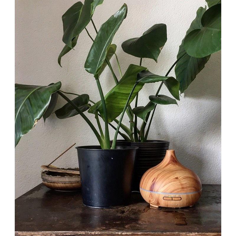 Diffuser voor aromatherapie bij planten