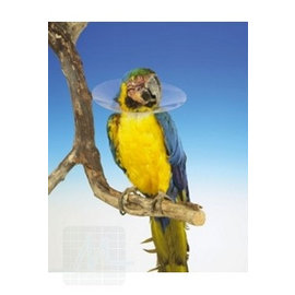 Bird Collar