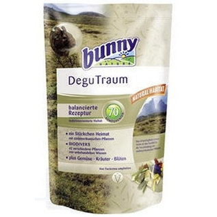 BUNNY Degu-dream