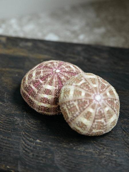Sea Urchin Alfonso Set of 2