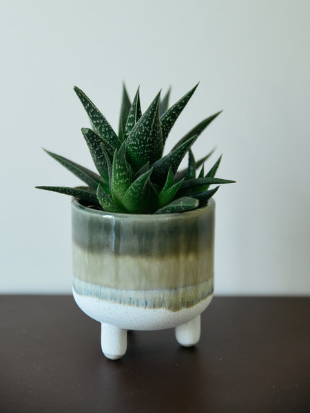 Sass & Belle Small Planter Mojave  Green
