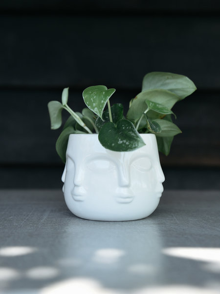 All Around Face Planter