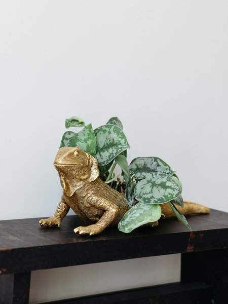 Iguana Planter Gold