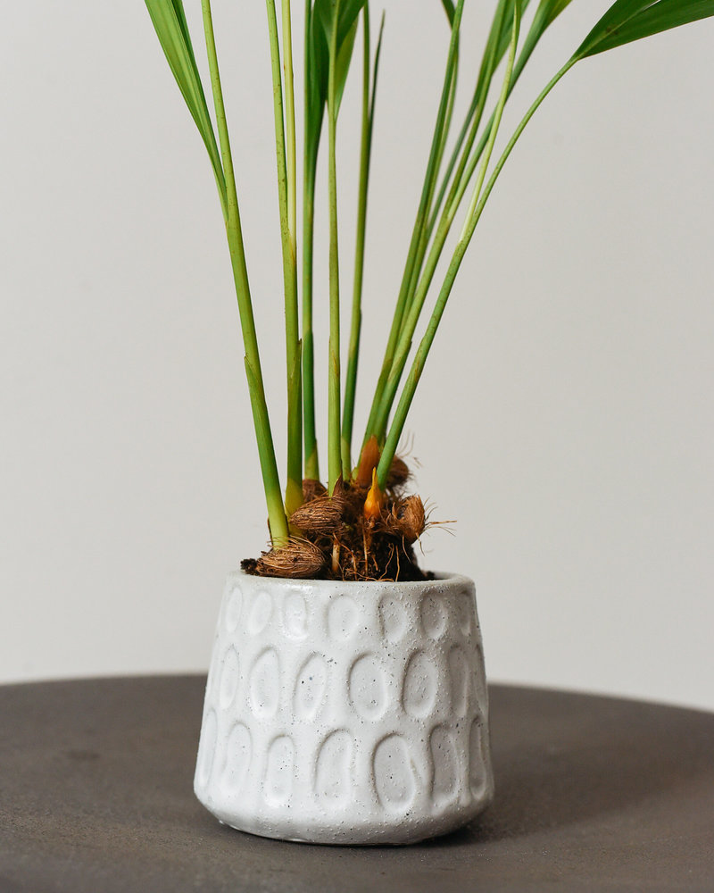 Mini Planter Dig White AAR6528WH