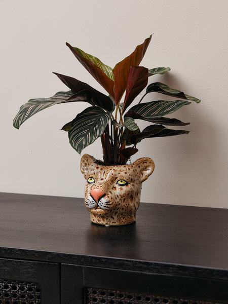 Planter Leopard Brown