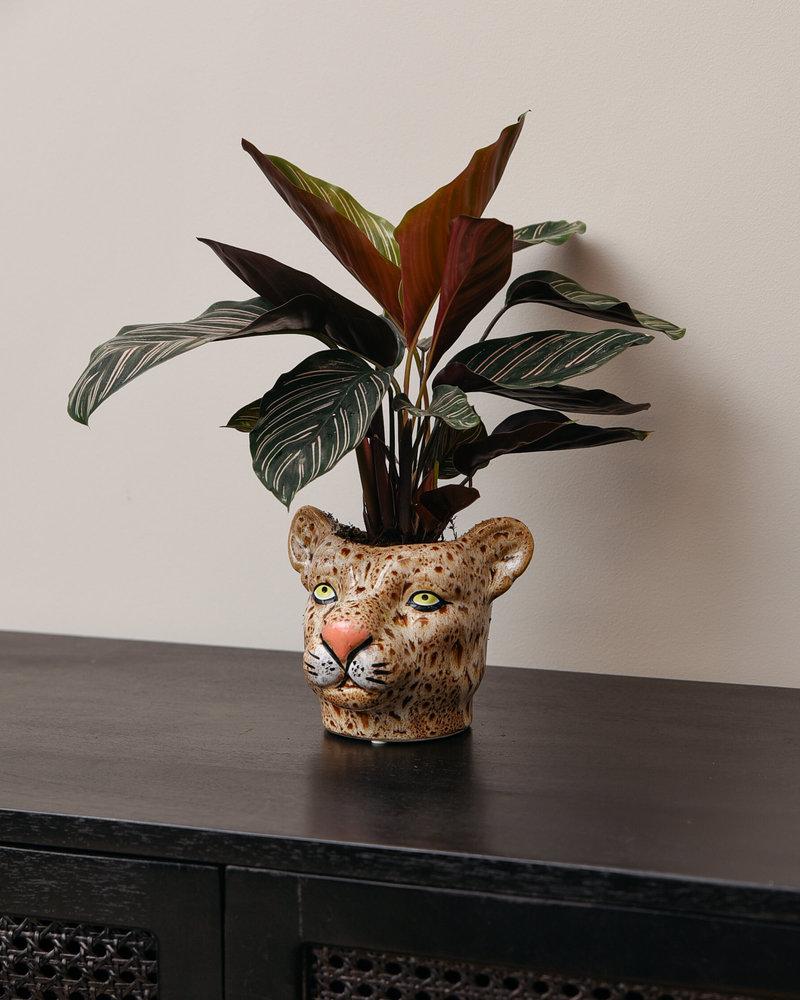 Planter Leopard Brown