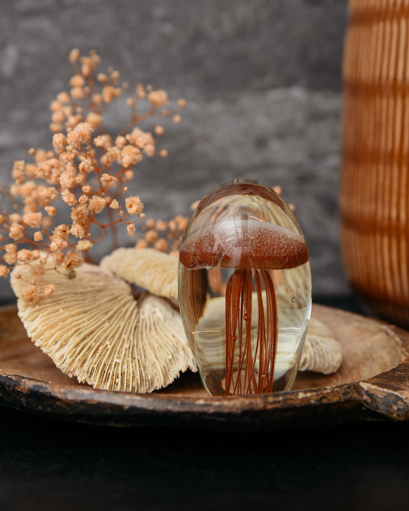 Jellyfish terra