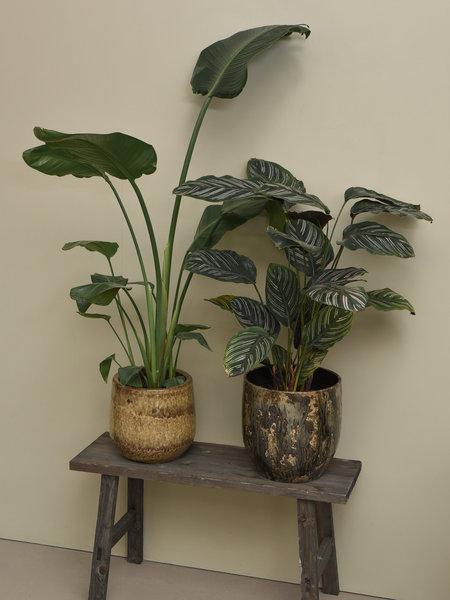 Plant + Pot Big