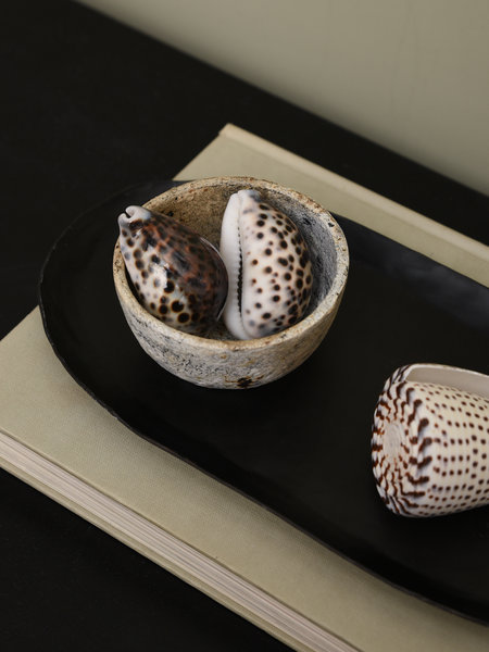 Van der Velde Deltaflower Tortoise Cowrie Sea Shell (SET OF 2)