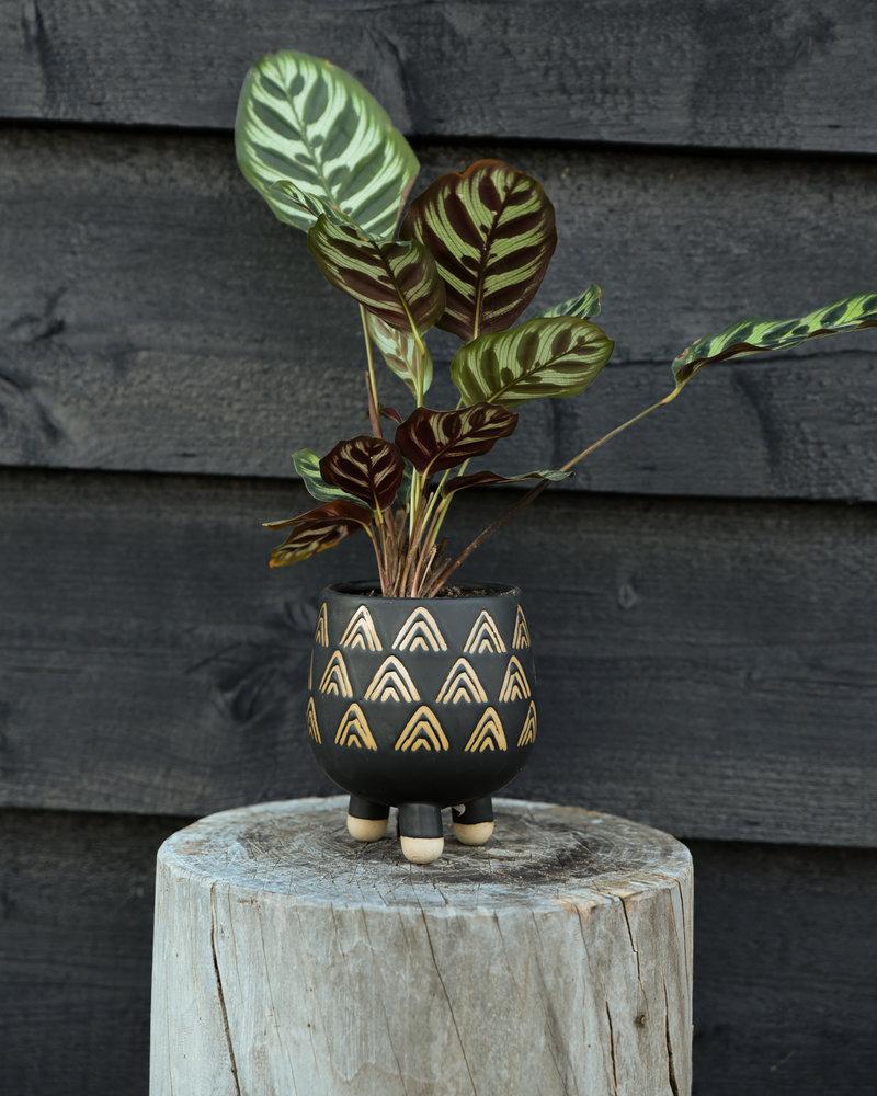 Planter Leggy Wax Resist Triangles Black Small
