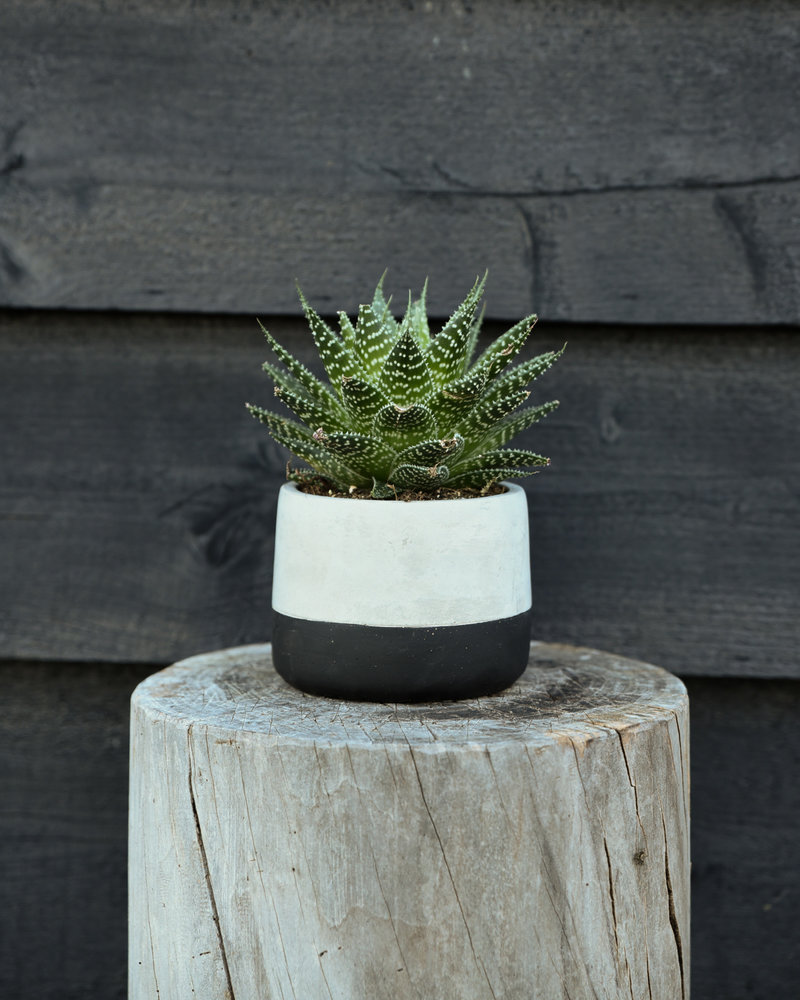 Planter Black Dip Cement Small