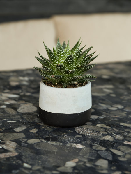 Sass & Belle Planter Black Dip Cement Small