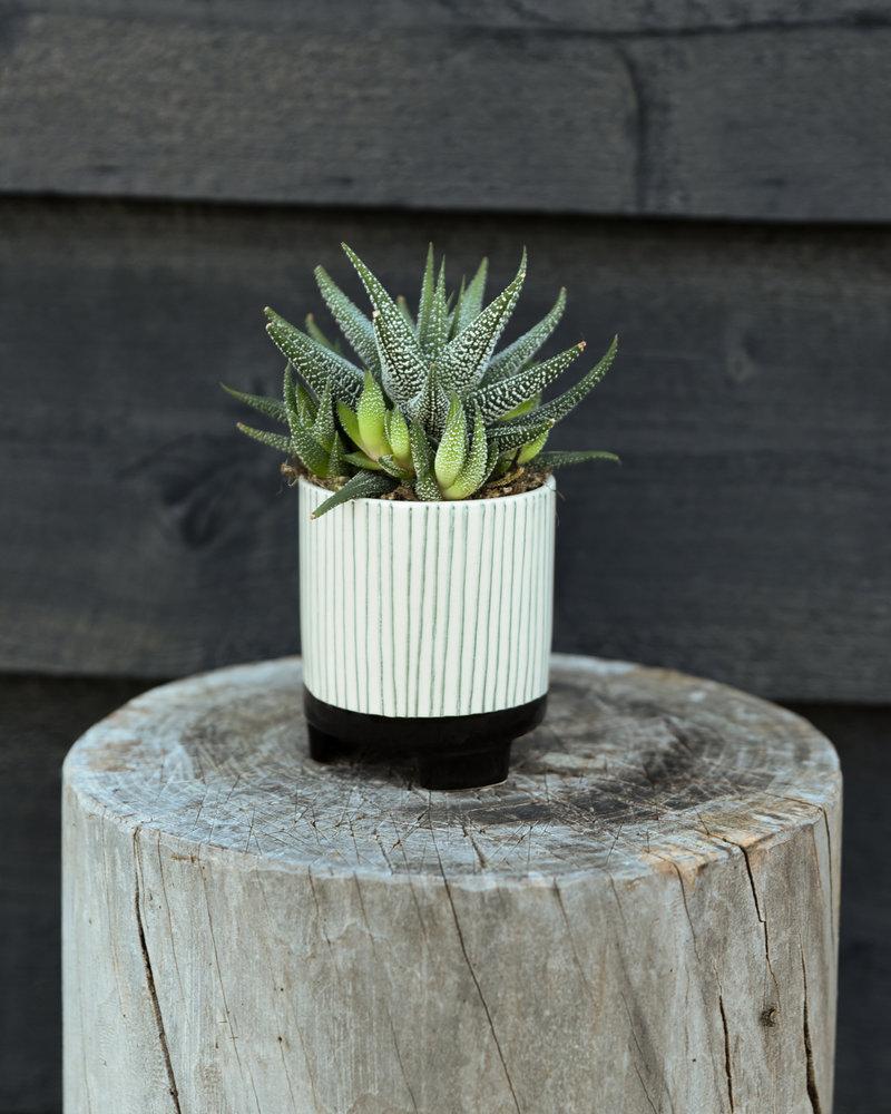 Planter Striped Geometric Mini