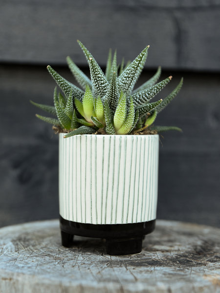 Sass & Belle Planter Striped Geometric Mini