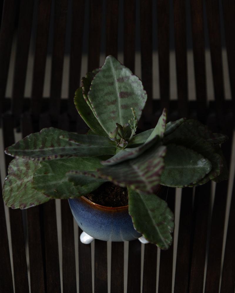 Planter Stoneware Blue