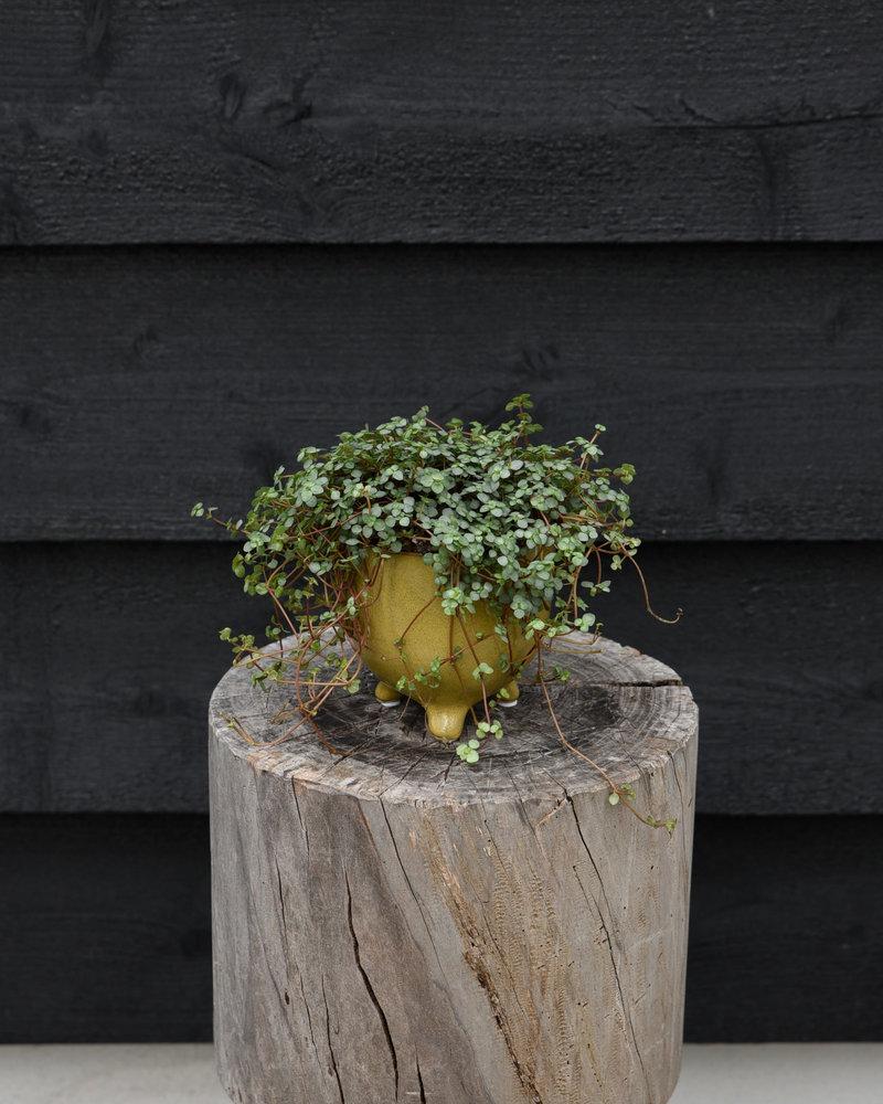 Elly Planter Yellow